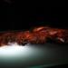 Rätselhafte Mumien - Die mysteriösen Moorleichen