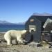 Bilder zur Sendung: Hessische Forscher und die Eisbären