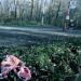 Entführte Kinder - Die Fälle Kronzucker und von Gallwitz