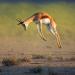 Move It! Überlebenstanz der Tiere
