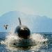 Orcas - Beutezug vor Südafrika