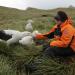 Insel der Albatrosse