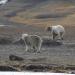 Wie ein einziger Tag - der Sommer in Spitzbergen