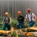 Bilder zur Sendung: Ax Men - Die Holzf�ller