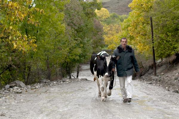 Bild 1 von 3: Tapdiq hat trotz aller Widerstände seine europäische Kuh gekauft.