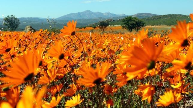 Wildes Südafrika
