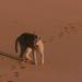 Tiermythen - Im Auge des Löwen