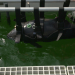 Wale in Gefahr - Warum die Meeressäuger unsere Hilfe brauchen