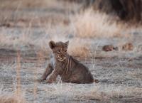 Tierkinder der Wildnis