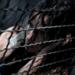 Bilder zur Sendung: Caged