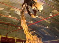 Die Entdeckung der Riesensaurier