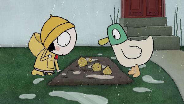 Bild 1 von 4: Sarah und Duck finden heraus, dass ihr Planschen das Beet der Schalotten ganz matschig gemacht hat.