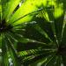 Australien - Im Dschungel der Riesenvögel