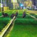 Brüssels wilde Tiere