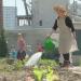 Heißes Pflaster Stadt - Warum wir mehr Pflanzen brauchen