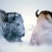 Bären, Trapper, Bisons - Winter in Yellowstone