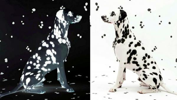 Wie die Kunst auf den Hund und die Katze kam
