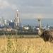 Kenia: Kein Platz für wilde Tiere
