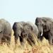 Elefanten hautnah - Giganten mit Gefühl