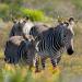 Abenteuer Erde: Wildes Südafrika (1)