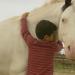 Die Pferdeflüsterin - Linda Weritz hilft