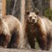 Fight Club der Tiere - Unbarmherzige Wildnis