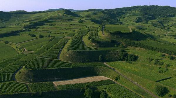 Bild 1 von 4: Der Kaiserstuhl ist das sonnenreichste und wärmste Rebengebiet Deutschlands und liegt gleichzeitig im Regenschatten der Vogesen: das ideale Klima für den Weinanbau.