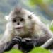 Geheimnisse Asiens - Die schönsten Nationalparks