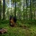 Bilder zur Sendung: Unsere Wälder