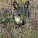 Familie Wolf - Gefährliche Nachbarn?