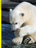 Eisbär, Affe & Co