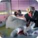 Bilder zur Sendung: Das wei�e Kaninchen