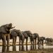 Okawango - Fluss der Träume