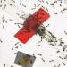 SCIENCEsuisse: Der Ameisen bester Freund
