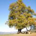 Bilder zur Sendung: Die geheimnisvolle Welt der Bäume