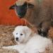 Das geheime Leben unserer Hunde II - Profis auf vier Pfoten
