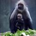 Bilder zur Sendung: Tierbabys - süß und wild!