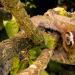 24 Stunden Wildnis - Jäger des Dschungels