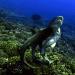 Der Hai - Das unbekannte Wesen