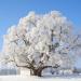 Bilder zur Sendung: Deutschlands älteste Bäume