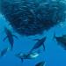 Unsere Ozeane Teil 1