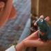 Bilder zur Sendung: Ratatouille