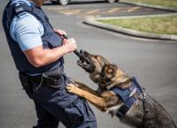Hunde im Einsatz