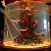 Die Aquarium-Profis