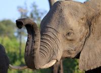 Elefanten hautnah