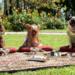 Bilder zur Sendung: Beverly Hills Chihuahua 2