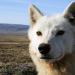 Abenteuer Erde: Polarwölfe - Überleben in Kanadas Arktis