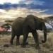 Serengeti - Der gro�e Aufbruch