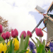 Urlaub ganz nah - Ein Streifzug durch Holland