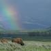 Yellowstone - Park der Extreme